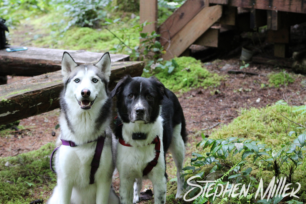 Riley (right) and Koda (left) get to experience the woods for the first time. They did great!