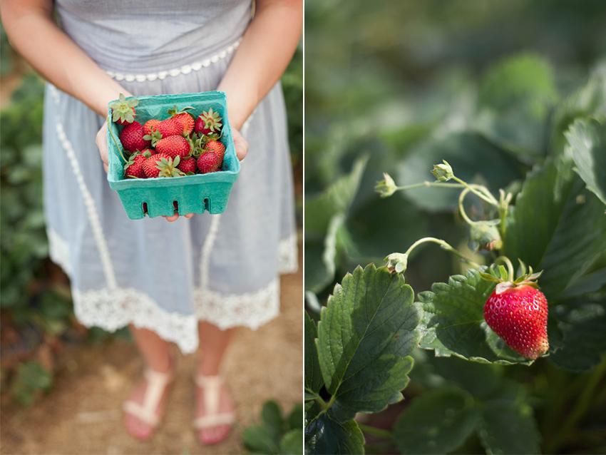 Hopkins May 2015-strawberry.jpg