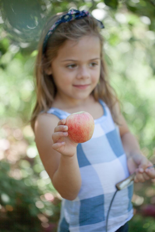 apple picking-8182.jpg