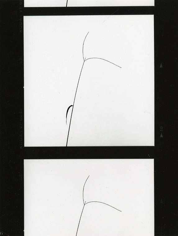 Untitled , c.1970s-80s  Gelatin silver photograph.  8 x 6 1/6 inches