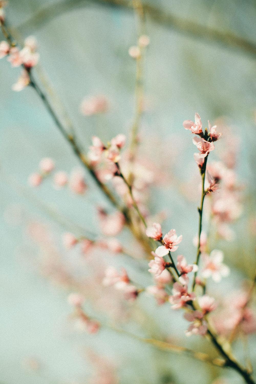 springpt1-4.jpg