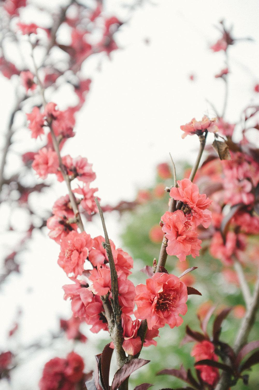 springpt2-1.jpg