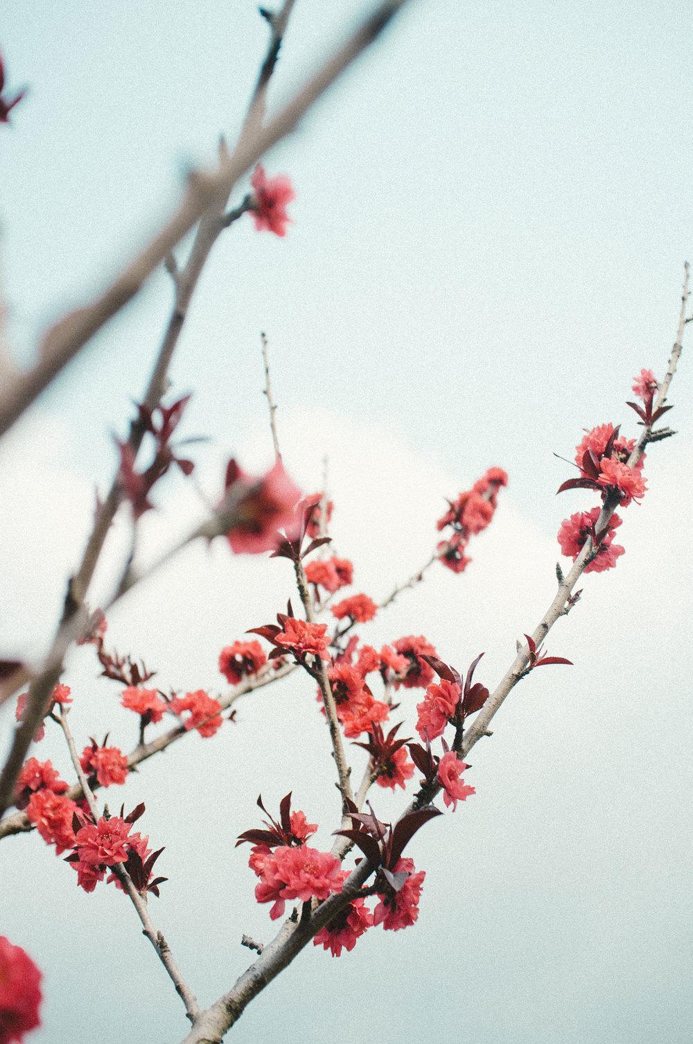 springpt2-5.jpg