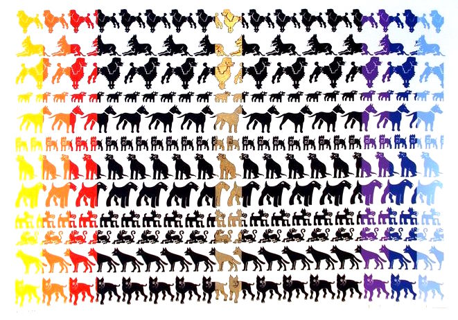 26. Desfile de Perros.jpg