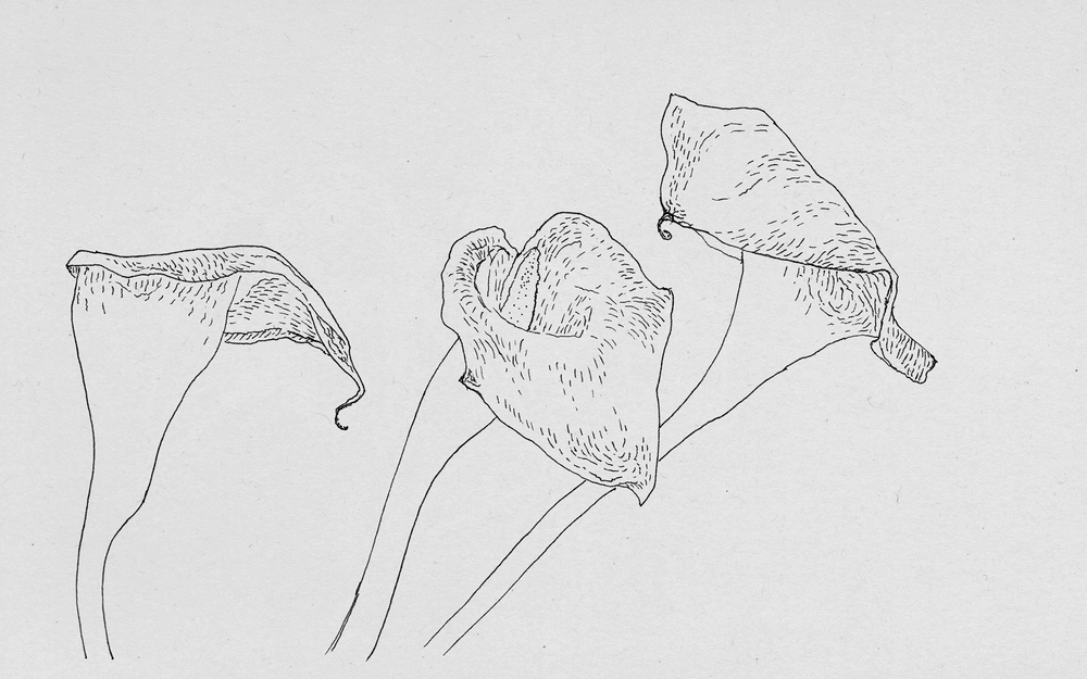 160903_calla-lilies-for-web_0018_Layer-3-.png
