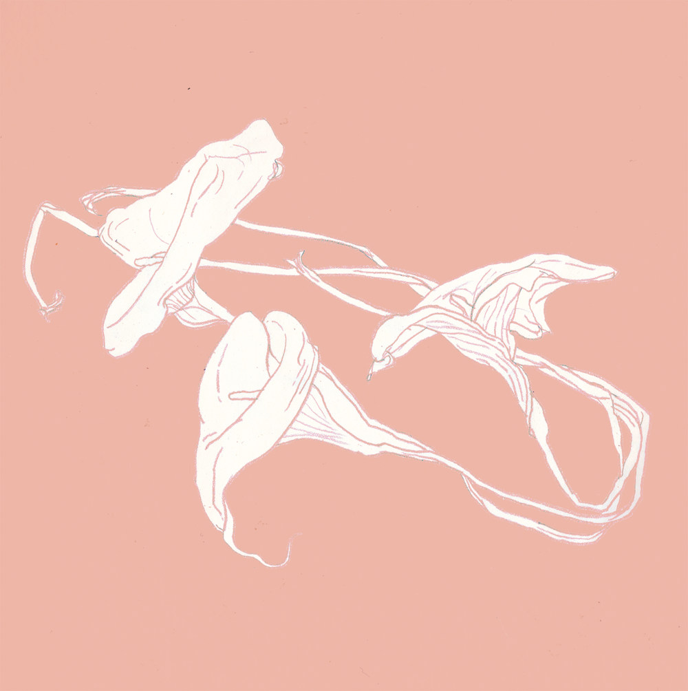 calla lily revisited_170605.png