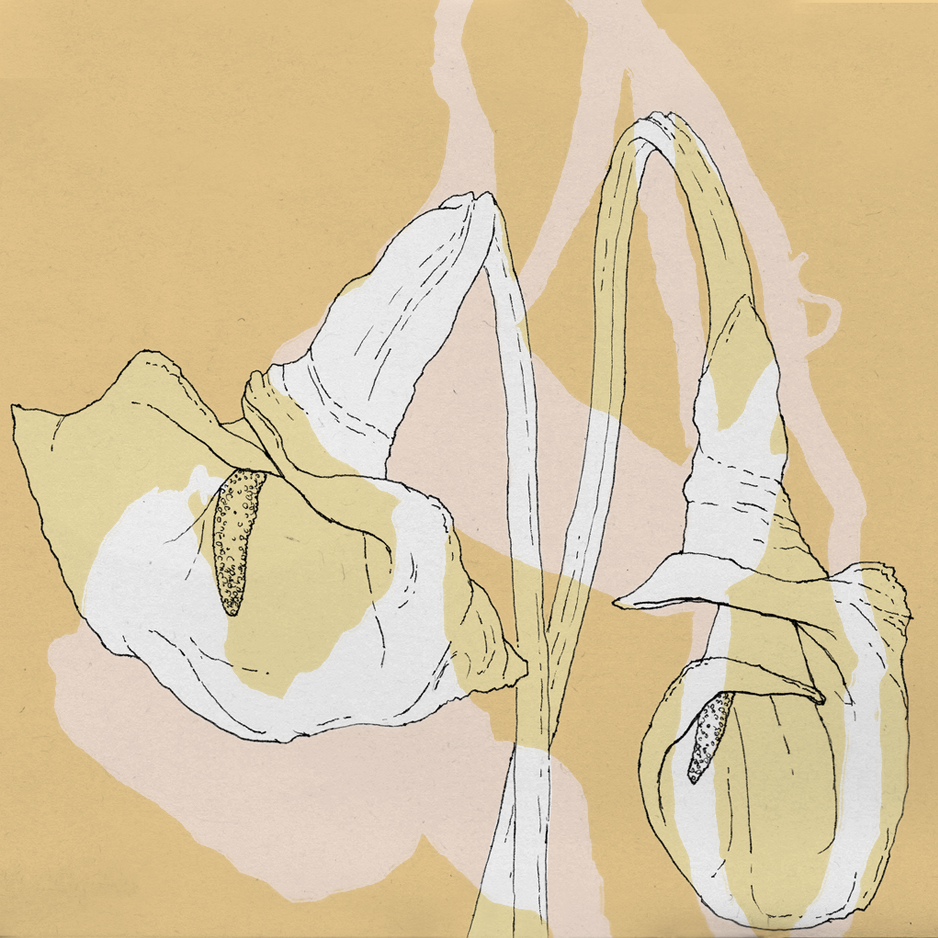 02_calla lilies_superimposed.png