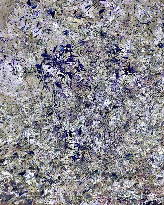 Invasive Species No. 1, (Focus Stack, 5 Images)