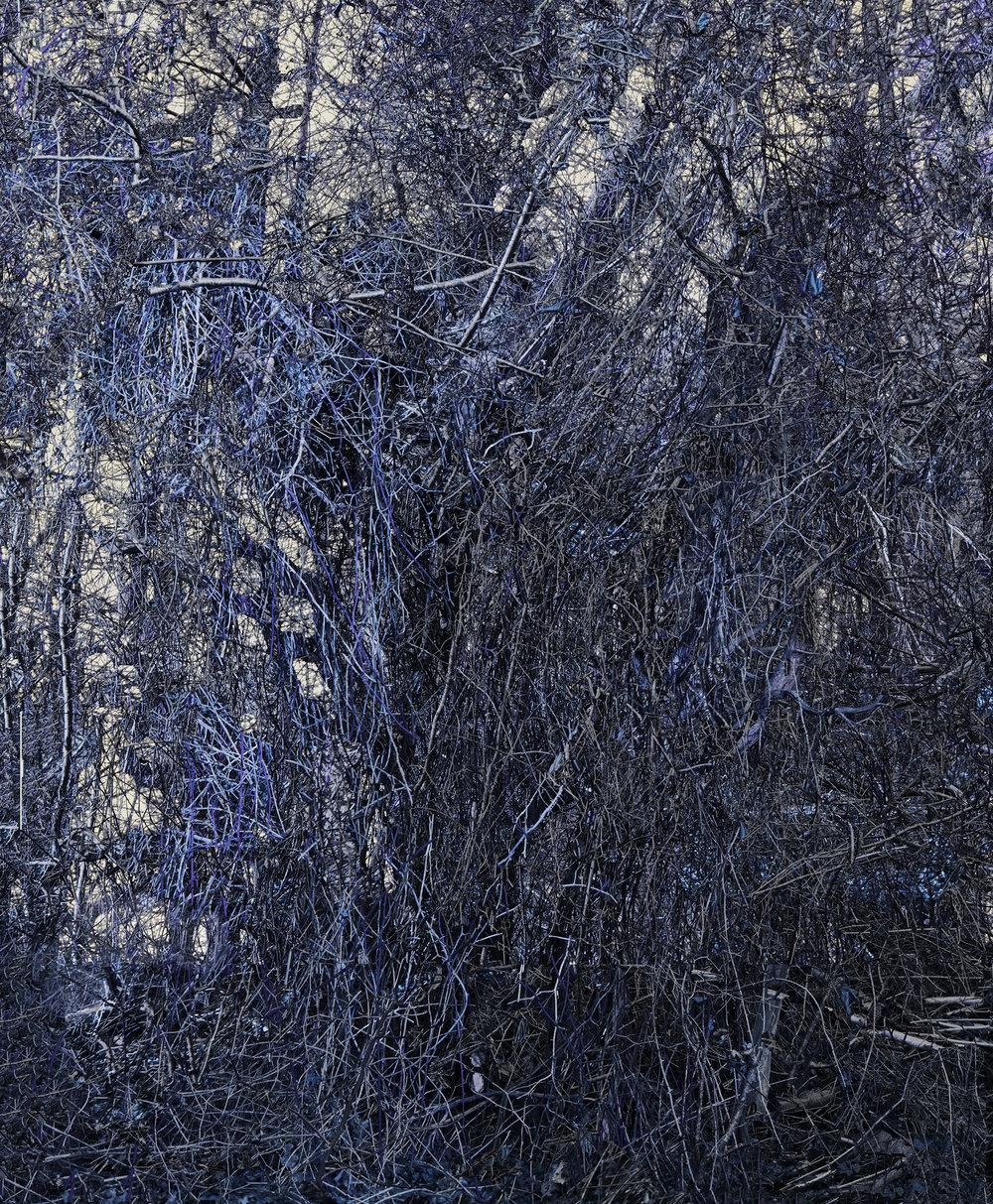 Invasive Species No. 2, Part 1, (Focus Stack, 9 Images)