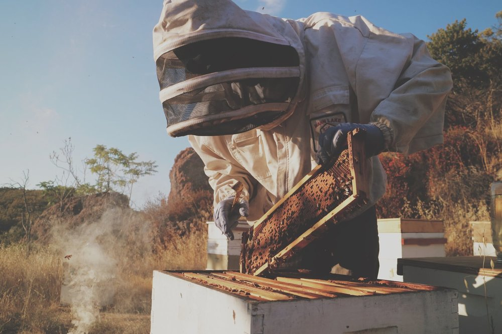 LEARN ABOUT BEES w/ ELI the beekeeper $60/person -