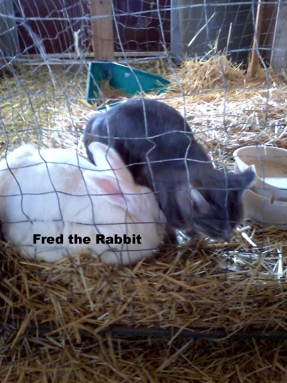fred the rabbit & one of the kitties.jpg