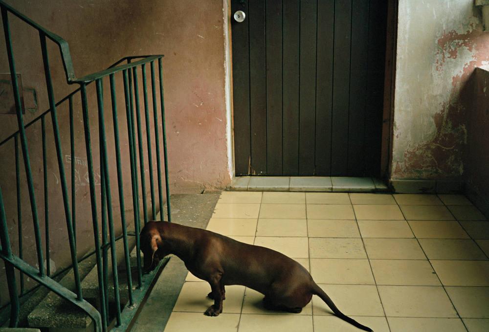 9_92BH_DogStairwell_060.jpg