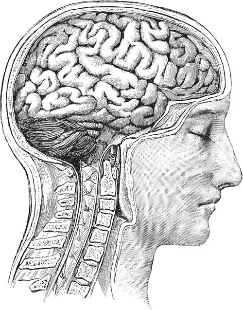 Brain meditation.jpg