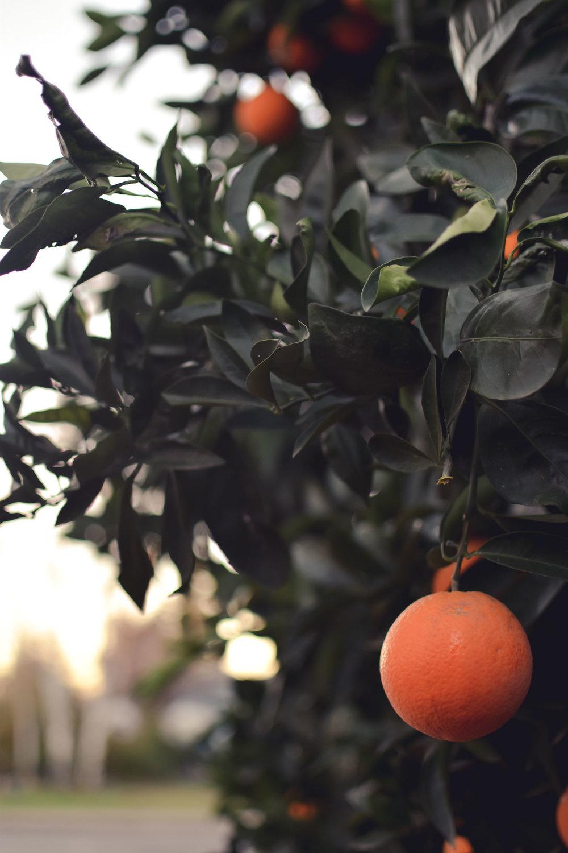 oranges-3.jpg