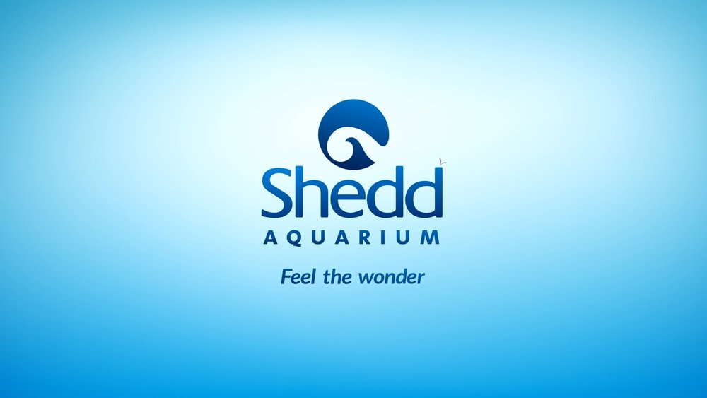 shedd.mp4.00_00_26_16.Still011.jpg