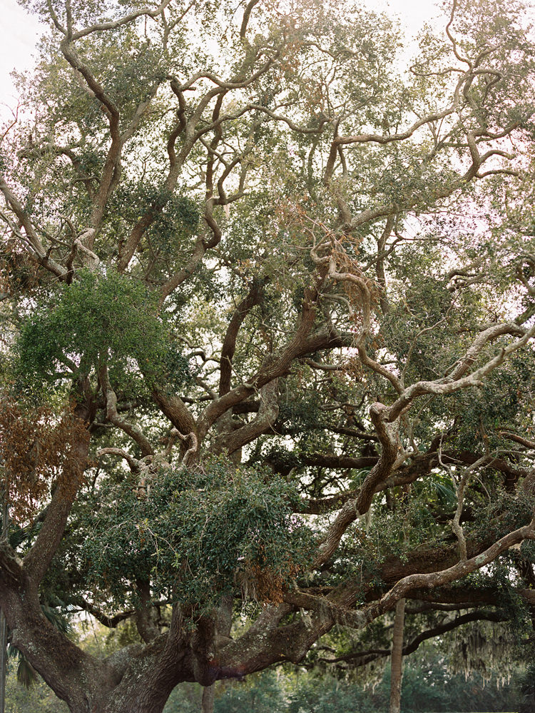 live-oak-tree-at-ribault-club-jacksonville-florida.jpg
