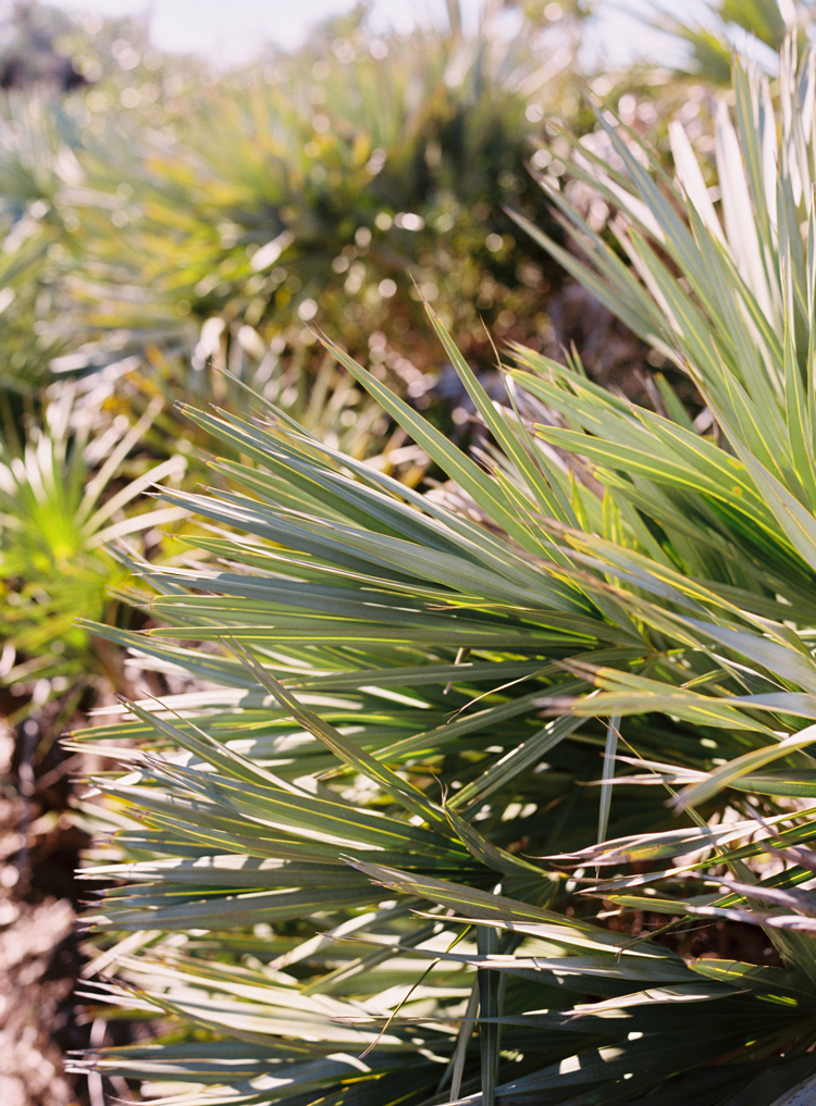 palmetto-leaves-at-new-smyrna-beach.jpg
