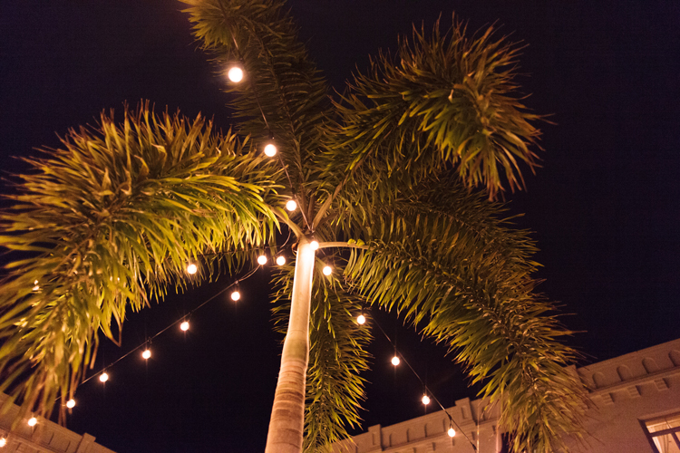 palm-tree-and-cafe-lights-at-night-casa-monica.jpg