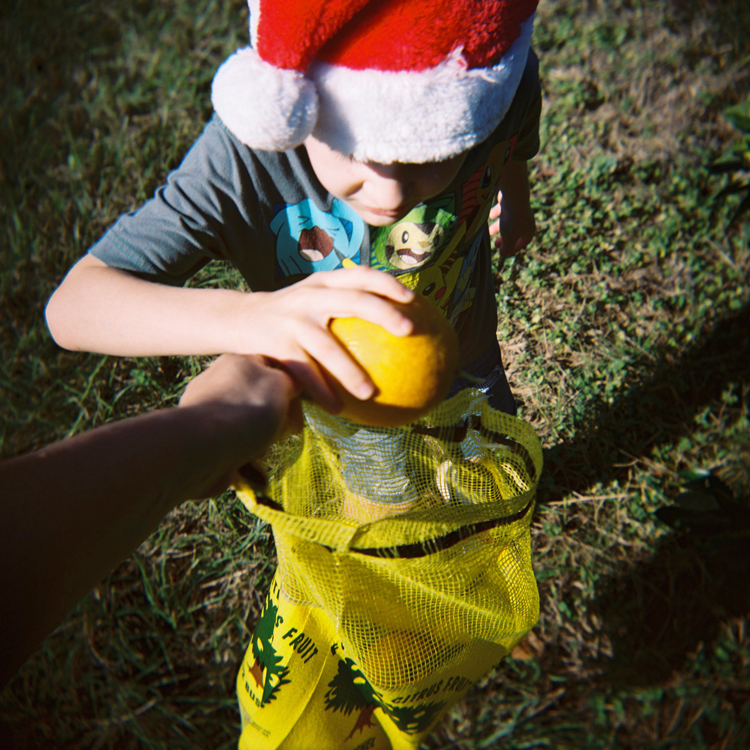 orange-picking-little-boy-in-santa-hat.jpg