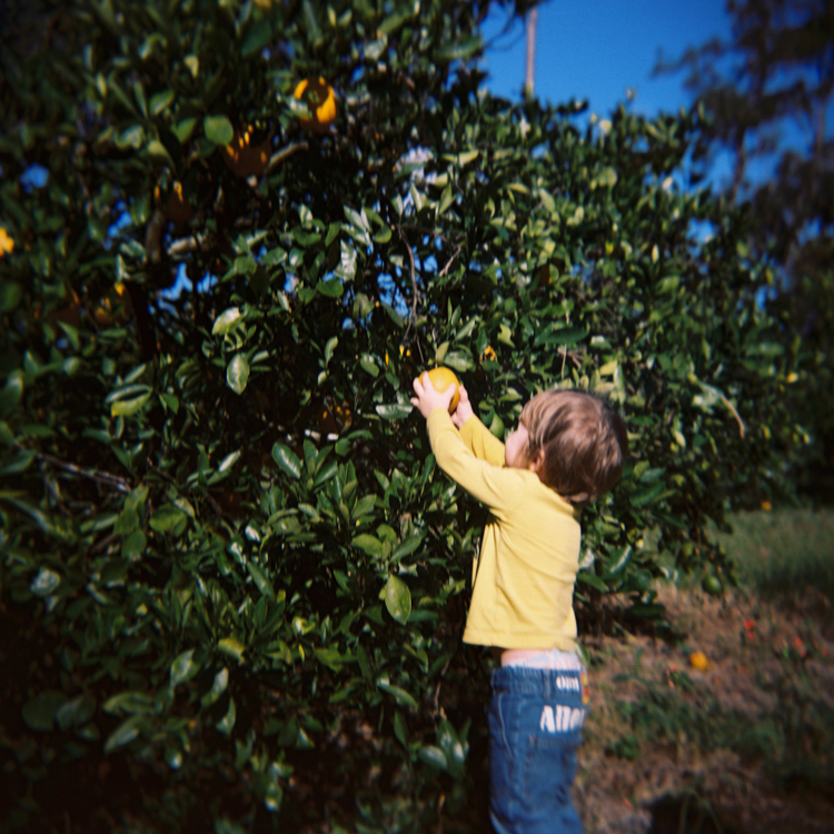 toddler-picking-an-orange-jacksonville-family-photographer.jpg