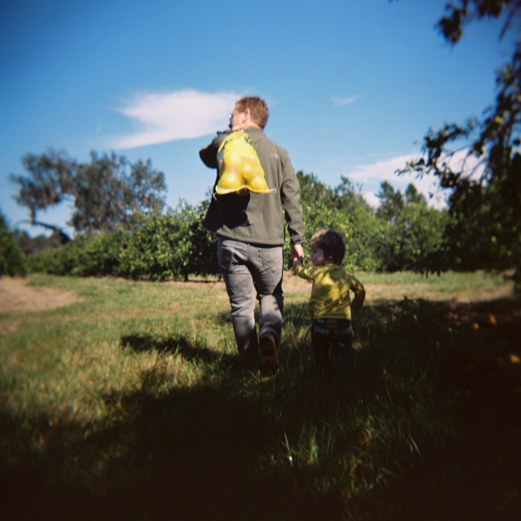 Father-and-son-picking-oranges-florida-family-photographer.jpg