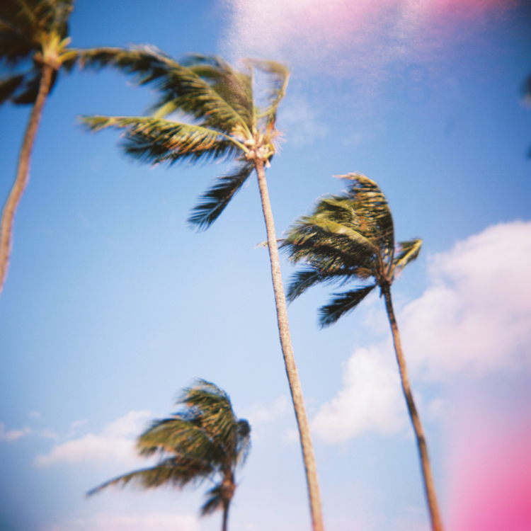 windy-palm-trees-in-maui.jpg