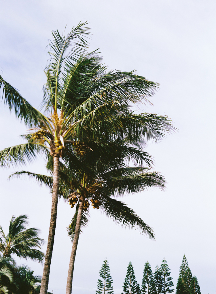palm-trees-and-pine-trees-hawaii.jpg