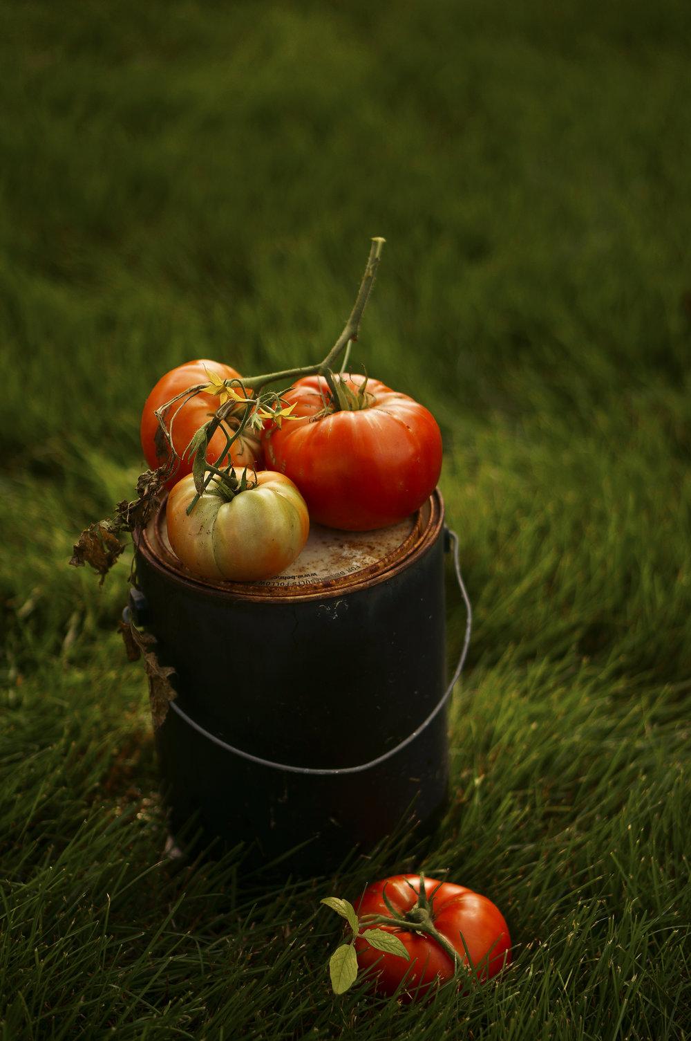 Tomatoesingrass-Hr-SimiJois.jpg