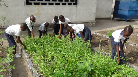 Students harvest the last of the raised beds in preparation for the next round of planting seeds