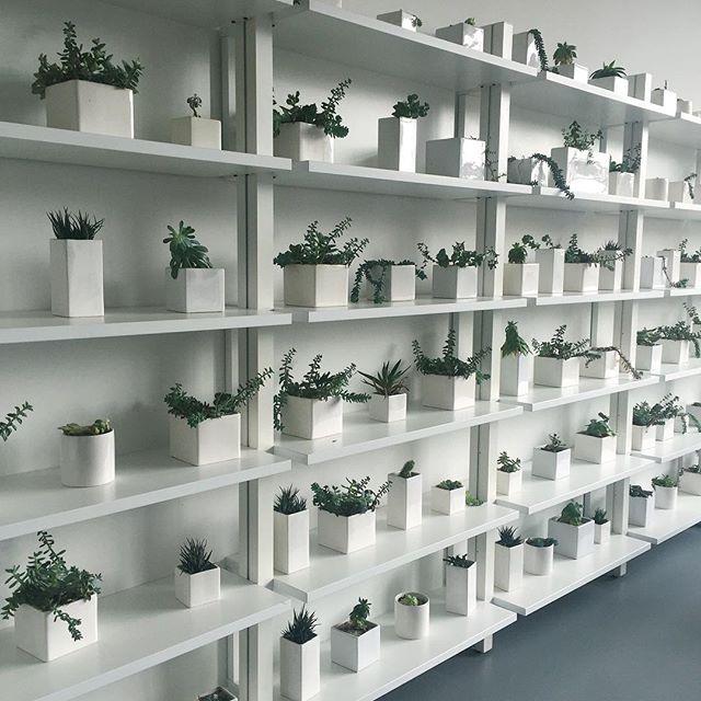 plant goals taken to the next level 🌿