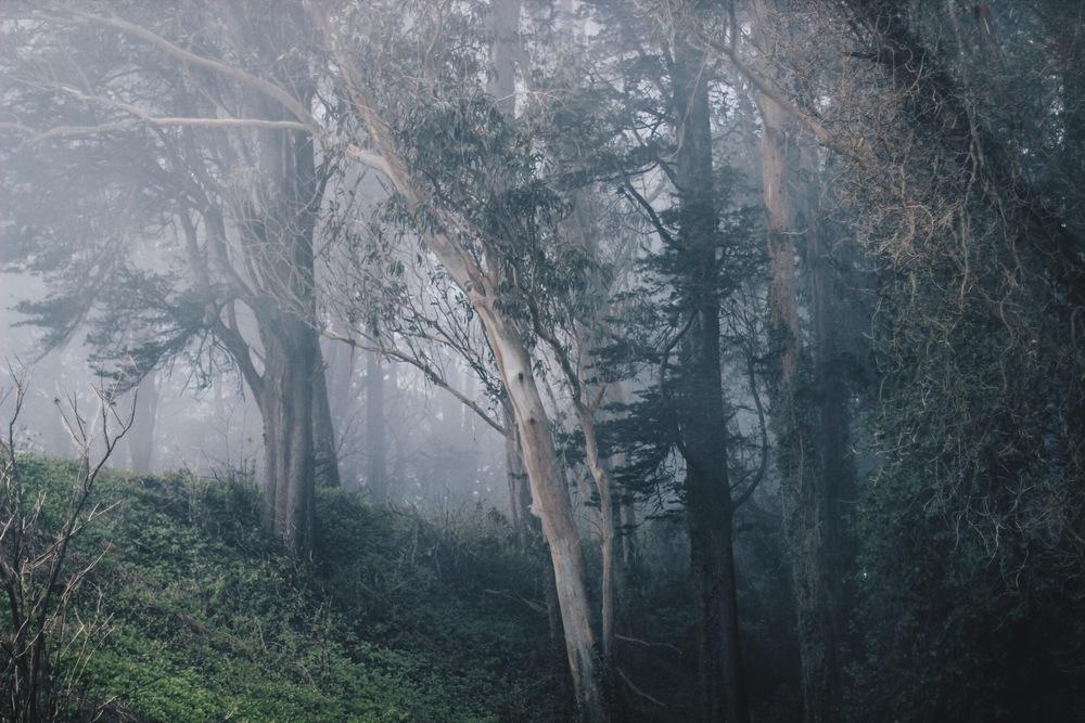 Mount Davidson // Mel Denisse