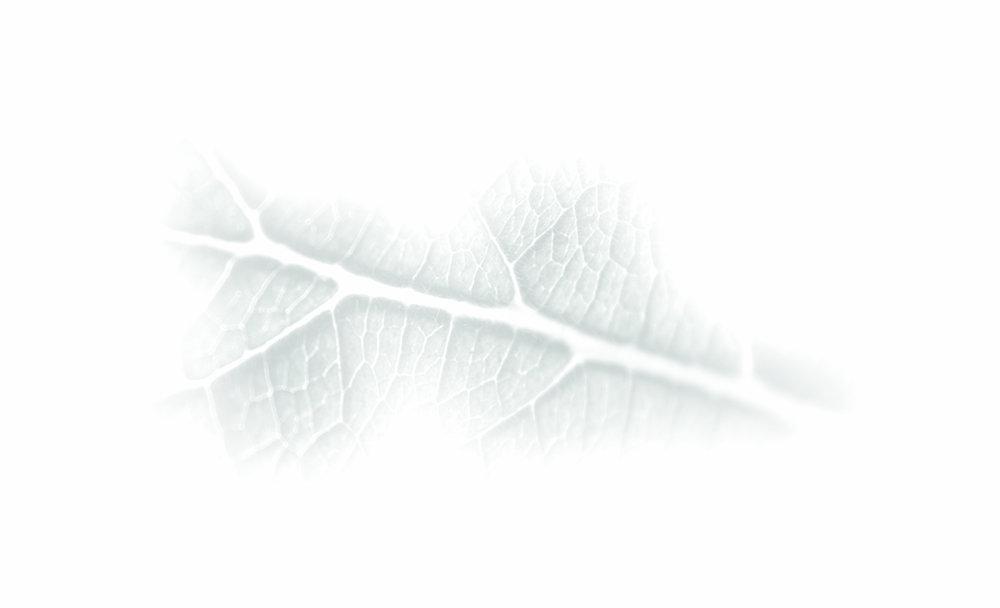 SWleaf-stain.jpg