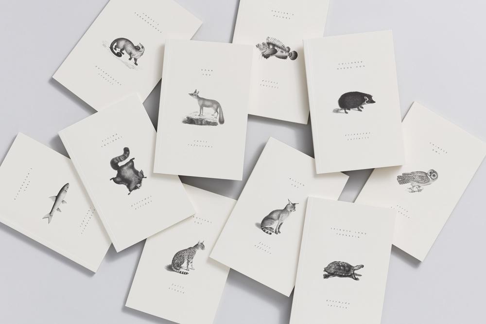 Reliefs_animaux_adrienne_bornstein_06.jpg