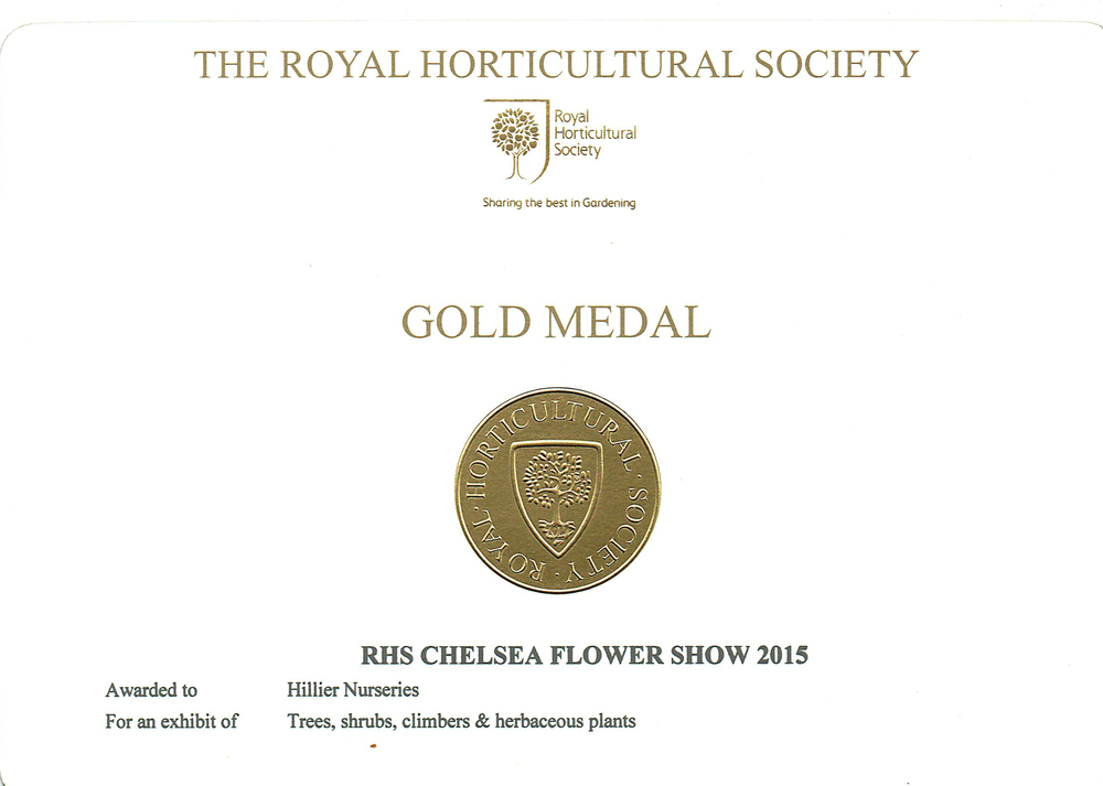 RHS Chelsea Gold medal from the 2015 show, for an exhibit at the show with which Ben helped.