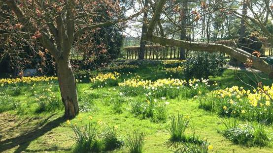 Swathes of daffodils and crocuses were added to an area of grass to create a woodland feel
