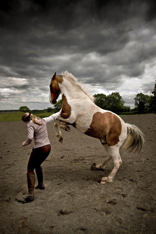 equine-portrait-ss.jpg