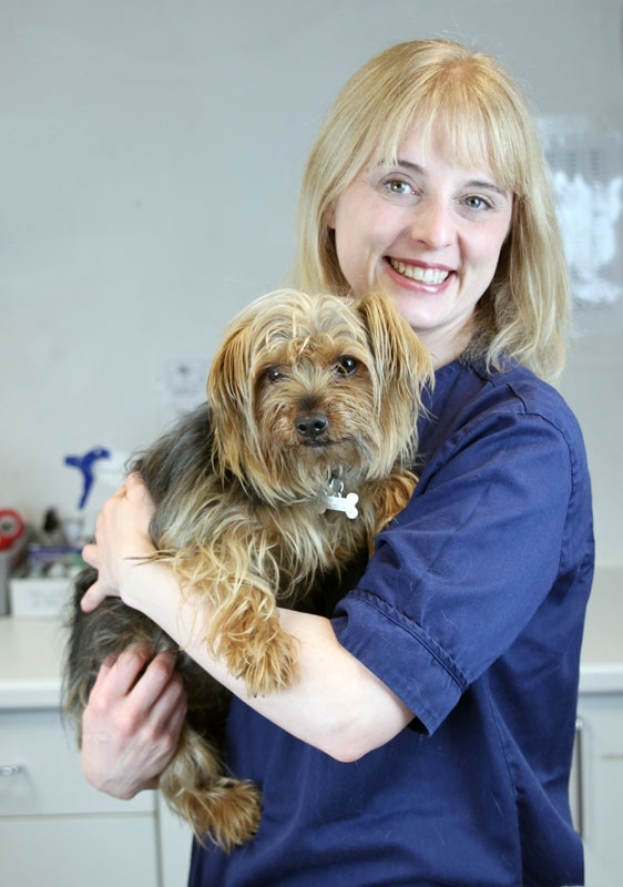 What to expect from pet acupuncture