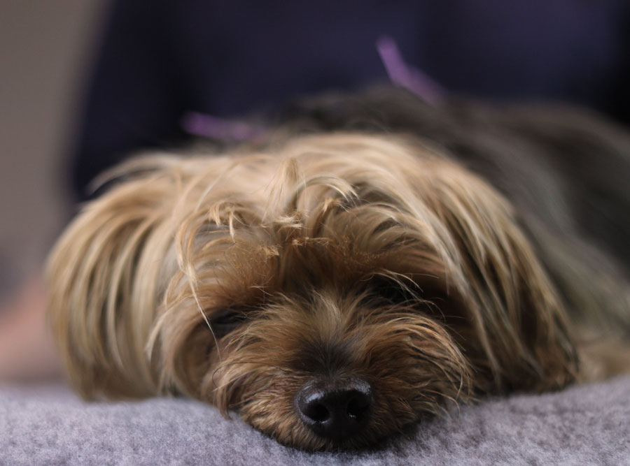 What to expect from veterinary acupuncture treatment    Learn more