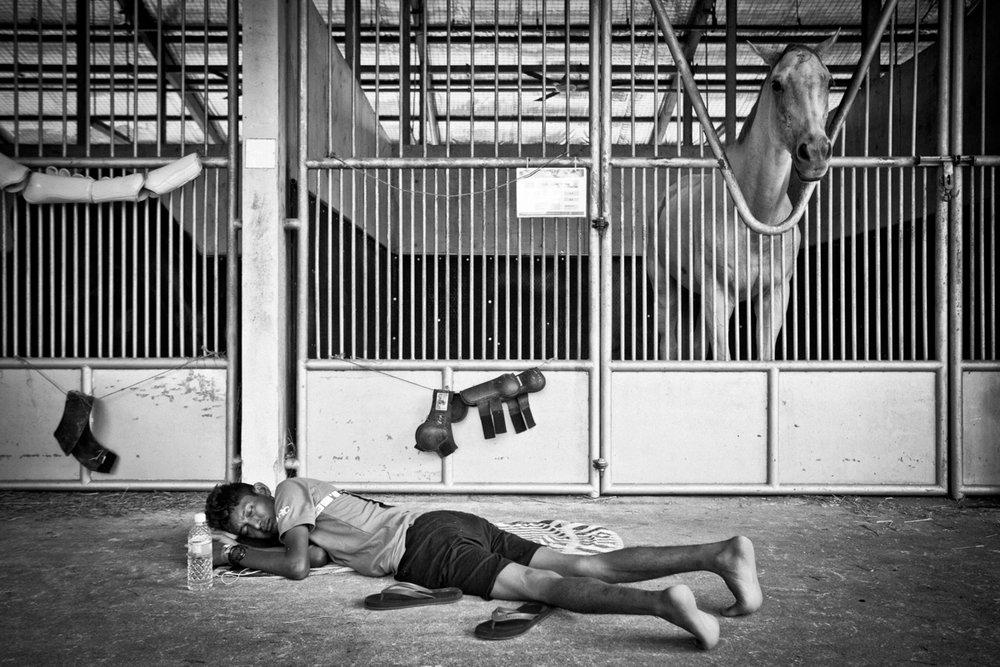 seagames-equestrian-bts-jun3-88.jpg