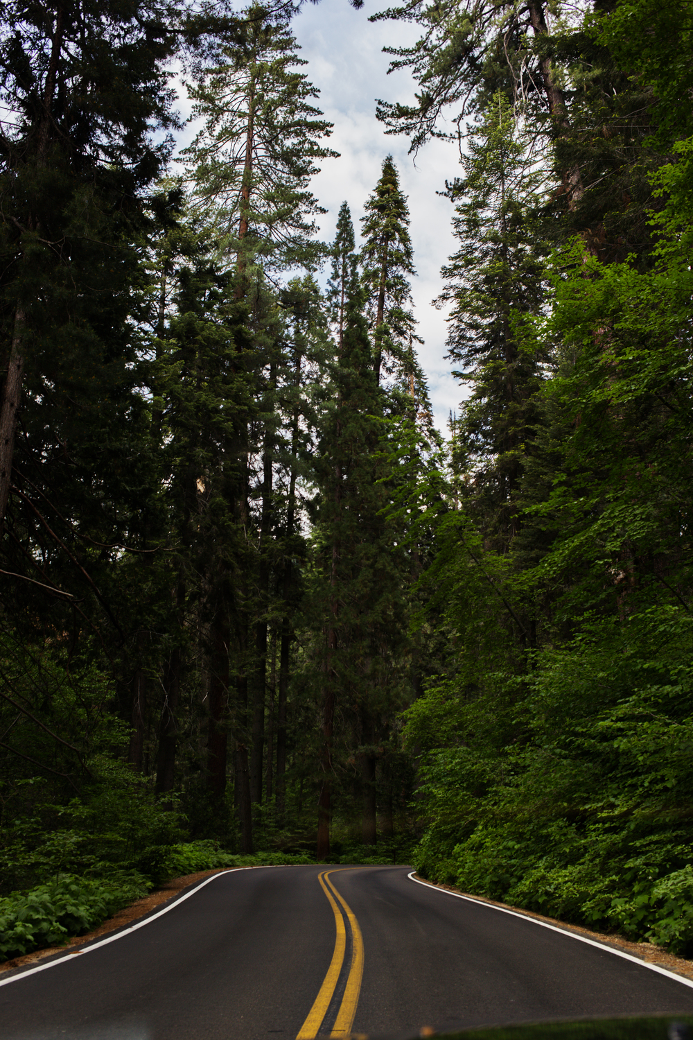 Sequioa - June 27, 2015  -IMG_2161_.jpg