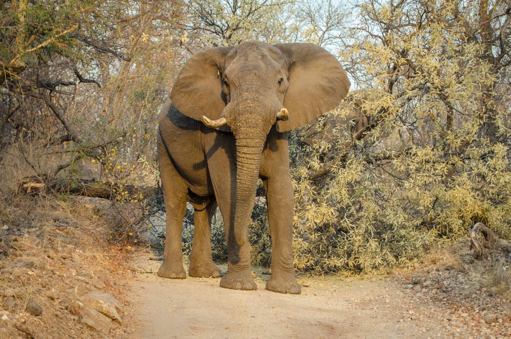 20140825_christoph_schlein_südafrika_wildlife_blog (5 von 43).jpg