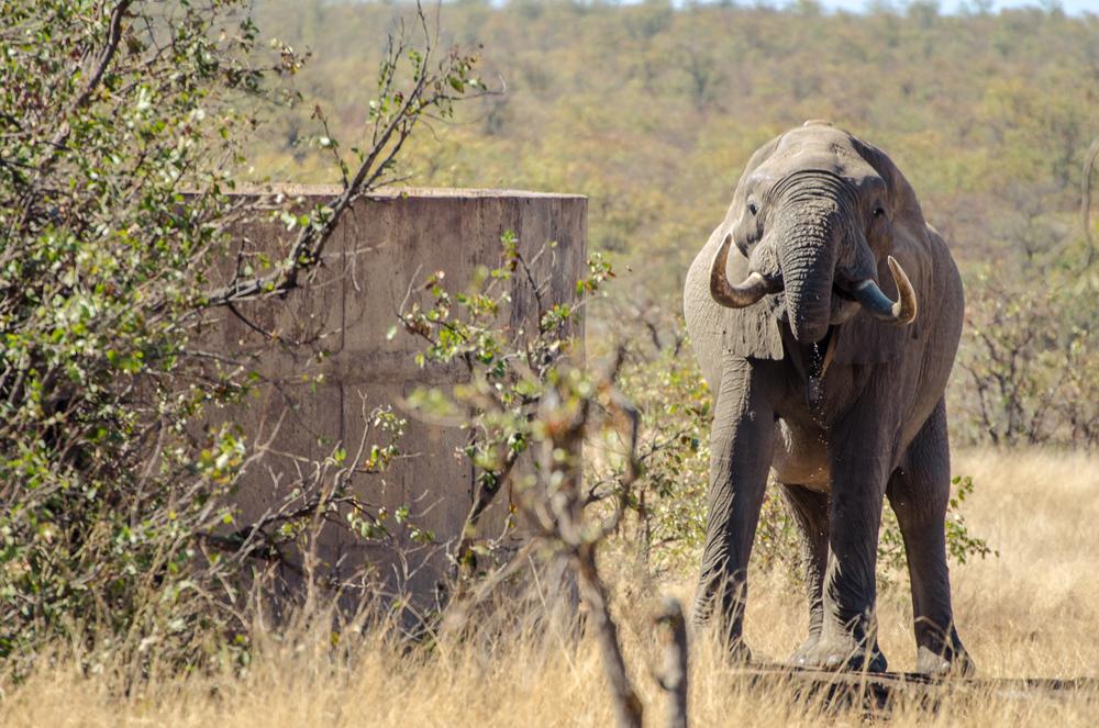 20140825_christoph_schlein_südafrika_wildlife_blog (10 von 43).jpg