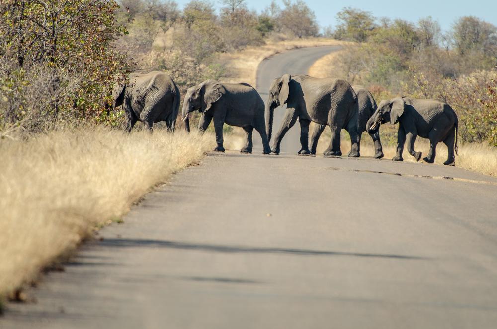 20140825_christoph_schlein_südafrika_wildlife_blog (11 von 43).jpg