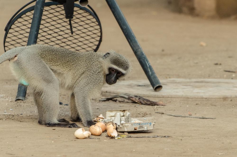 20140825_christoph_schlein_südafrika_wildlife_blog (12 von 43).jpg