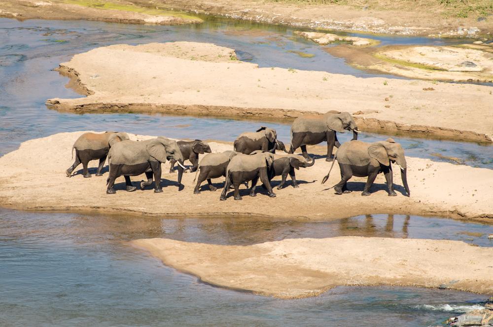 20140825_christoph_schlein_südafrika_wildlife_blog (14 von 43).jpg