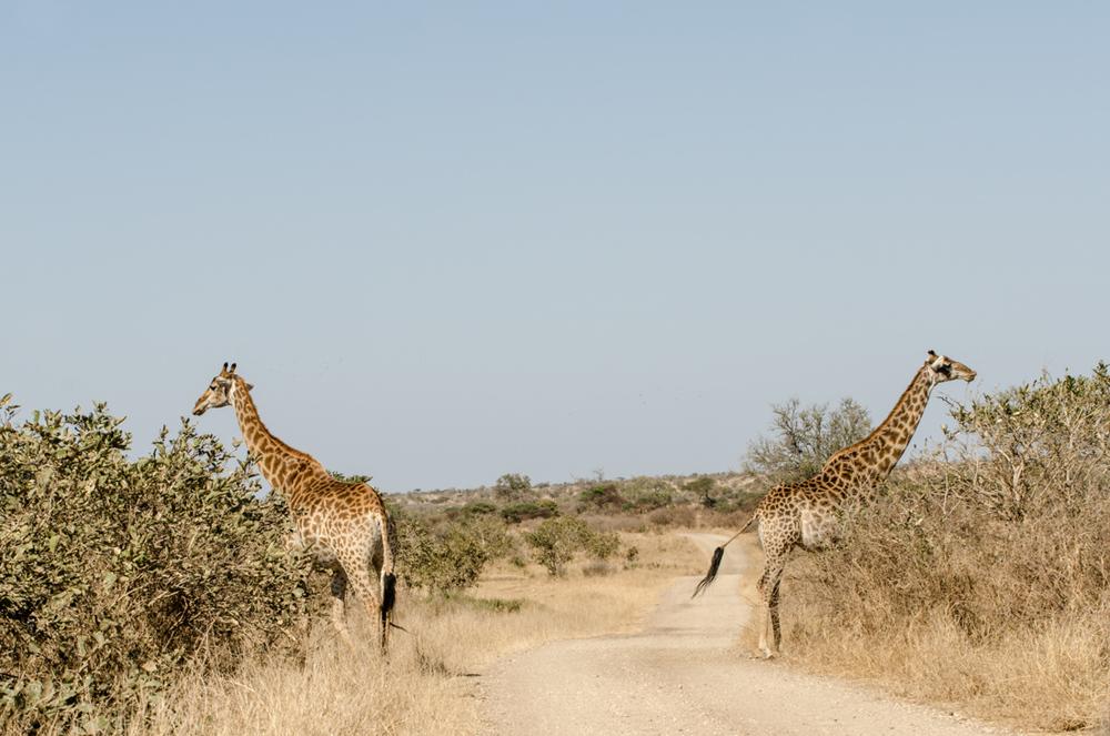 20140825_christoph_schlein_südafrika_wildlife_blog (16 von 43).jpg