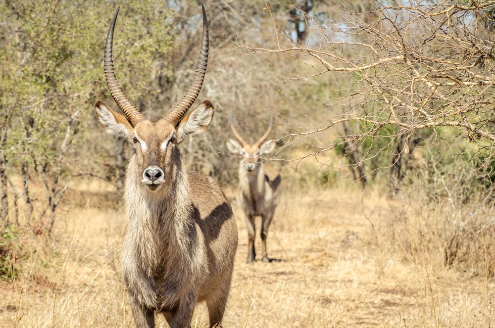 20140825_christoph_schlein_südafrika_wildlife_blog (17 von 43).jpg