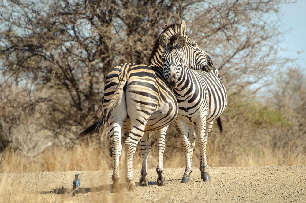 20140825_christoph_schlein_südafrika_wildlife_blog (18 von 43).jpg
