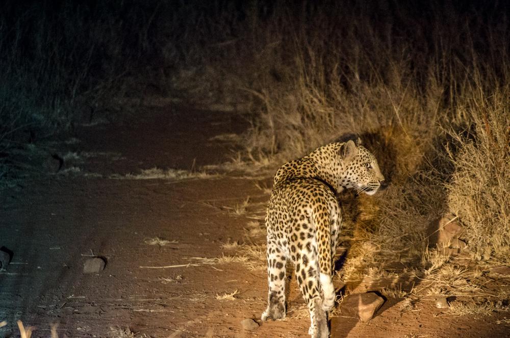 20140825_christoph_schlein_südafrika_wildlife_blog (20 von 43).jpg