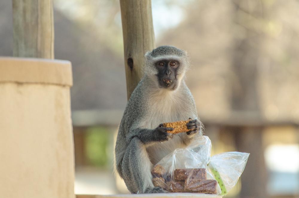 20140825_christoph_schlein_südafrika_wildlife_blog (19 von 43).jpg
